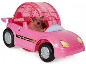 hamster-race-car